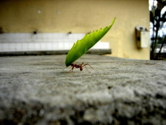 Mercy on ant